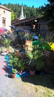 Ambiance jardin des plantes